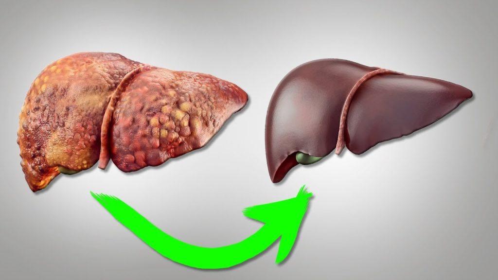 Как восстанавливается печень после гепатита