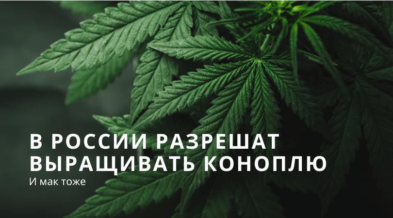 Запрет на выращивание конопли персен марихуана